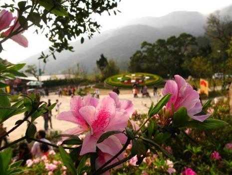 2017 Yangmingshan Flower Festival